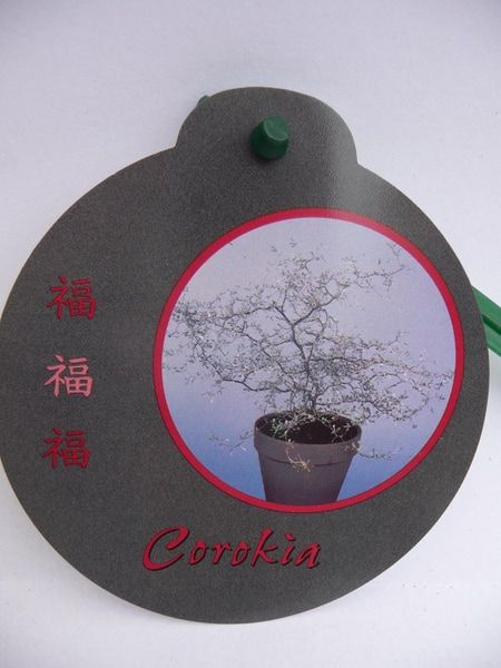 corokia-cotoneaster-p17-0